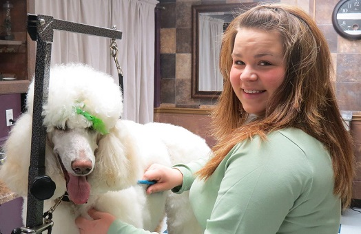 Owner Tanya Washburn grooming a happy Poodle -  Summer Cut